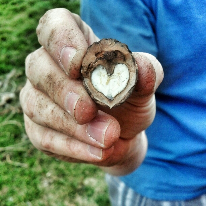 week 7 walnut