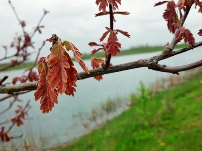 week 04 white oak