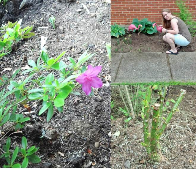 week 3 garden