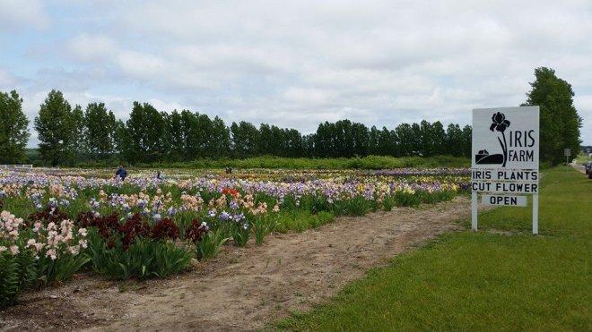 140612 - iris farms 01