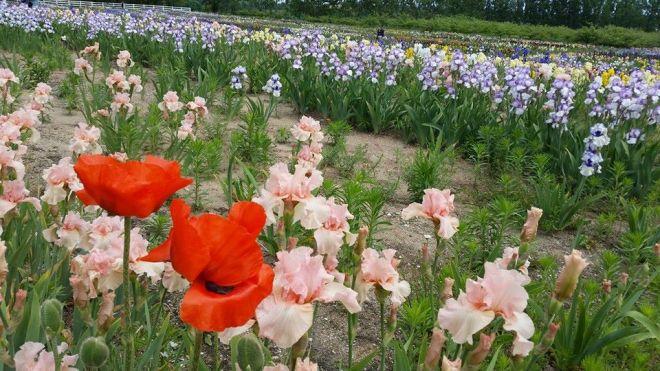 140612 - iris farms 02