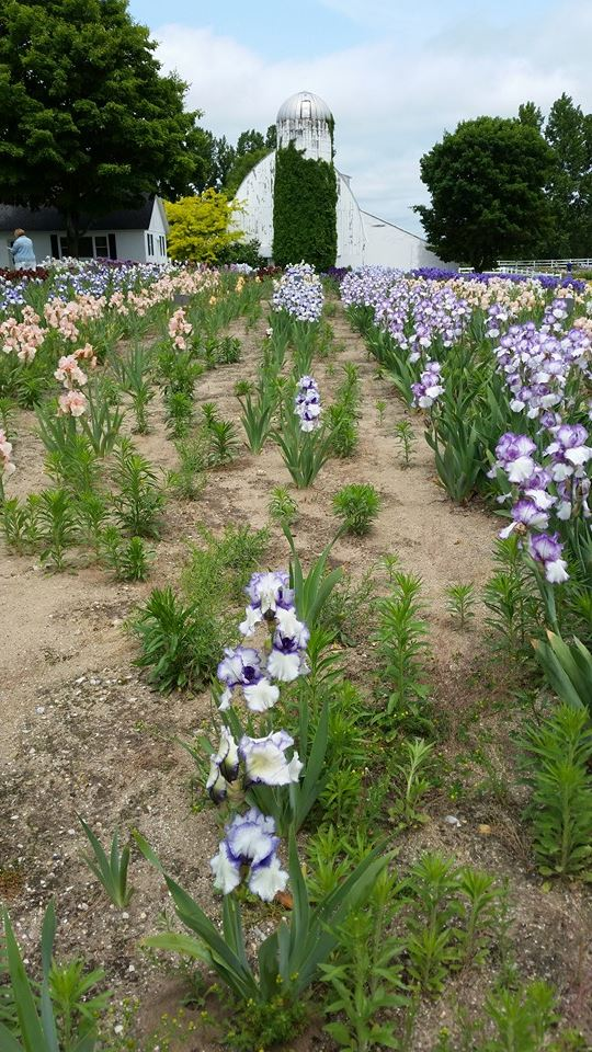 140612 - iris farms 03