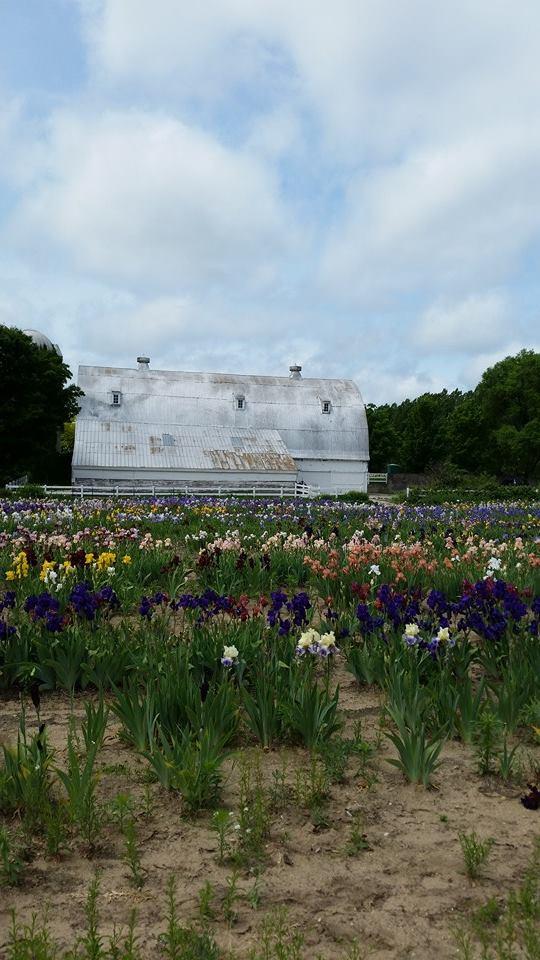 140612 - iris farms 04