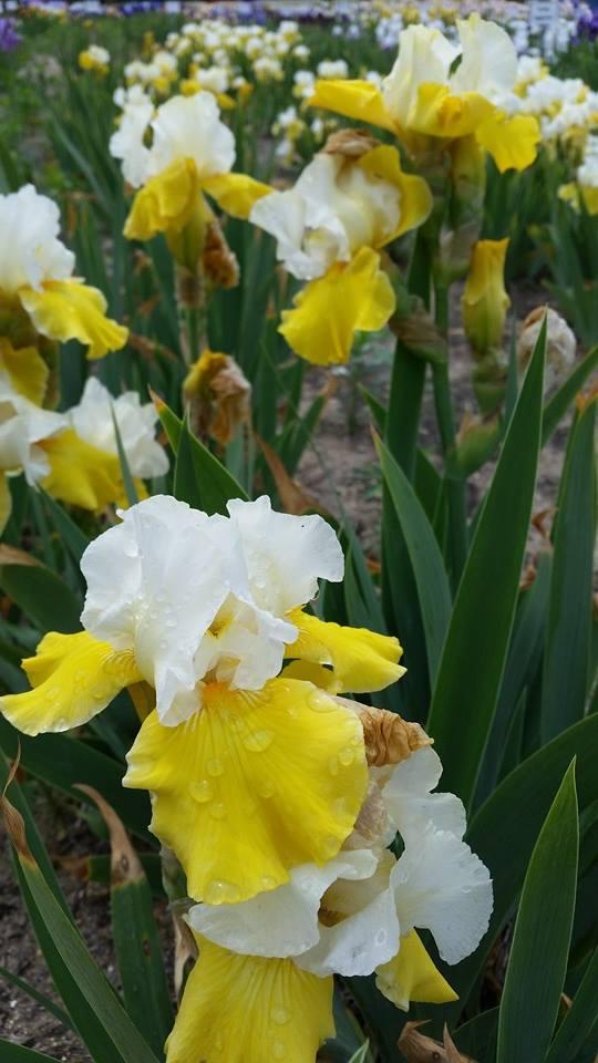 140612 - iris farms 05
