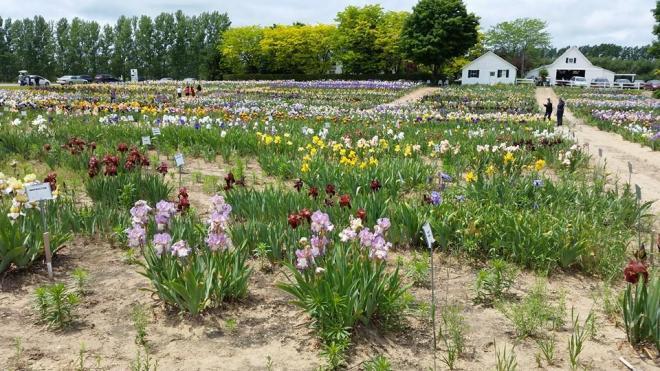 140612 - iris farms 07