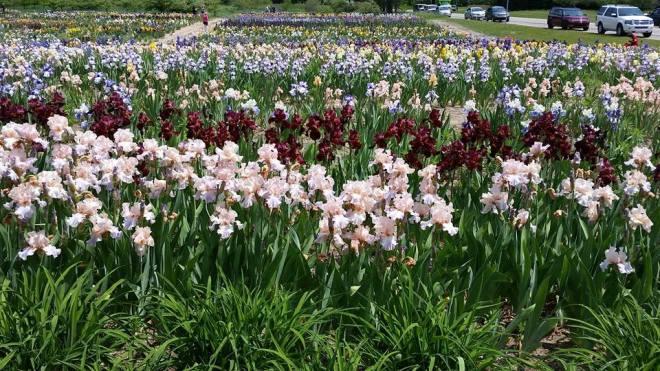 140612 - iris farms 14