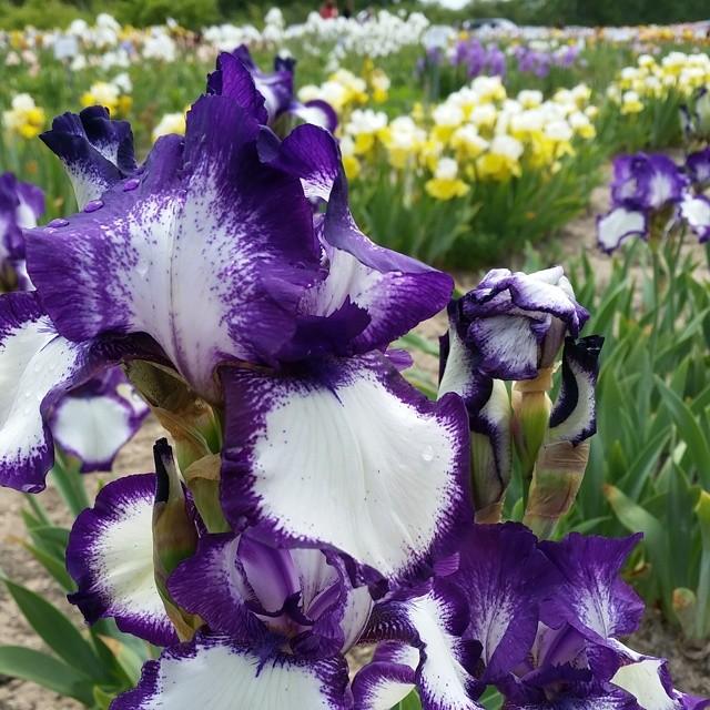 140612 - iris farms 15